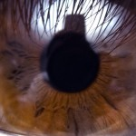 close-up of the iris of an eye