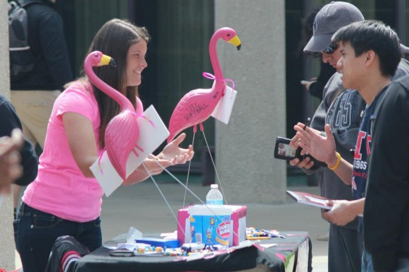 Flames softball raised nearly $4,200 for the fight against breast cancer. At Flock the Quad, team members filled the plaza with plastic flamingoes and made money with a bake sale and games.