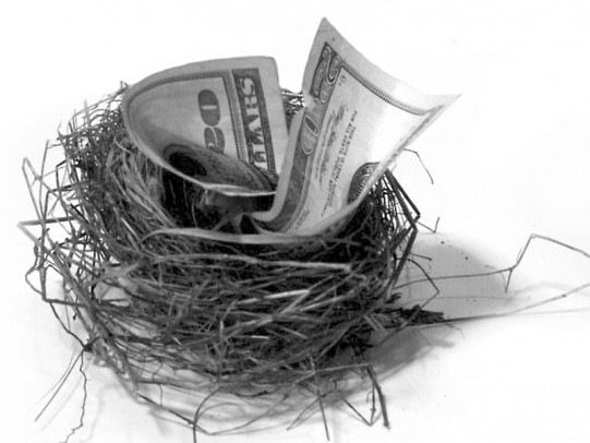 Twenty-dollar bill stuffed in a nest