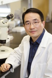 Jingsong Xu, assistant professor of pharmacology. Photo: Joshua Clark