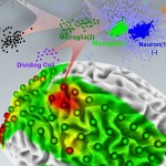 cellular interactome shows cellular changes in epileptic brain tissue;