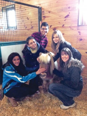 students petting a miniature horse