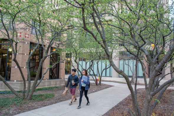 students walk between trees on campus