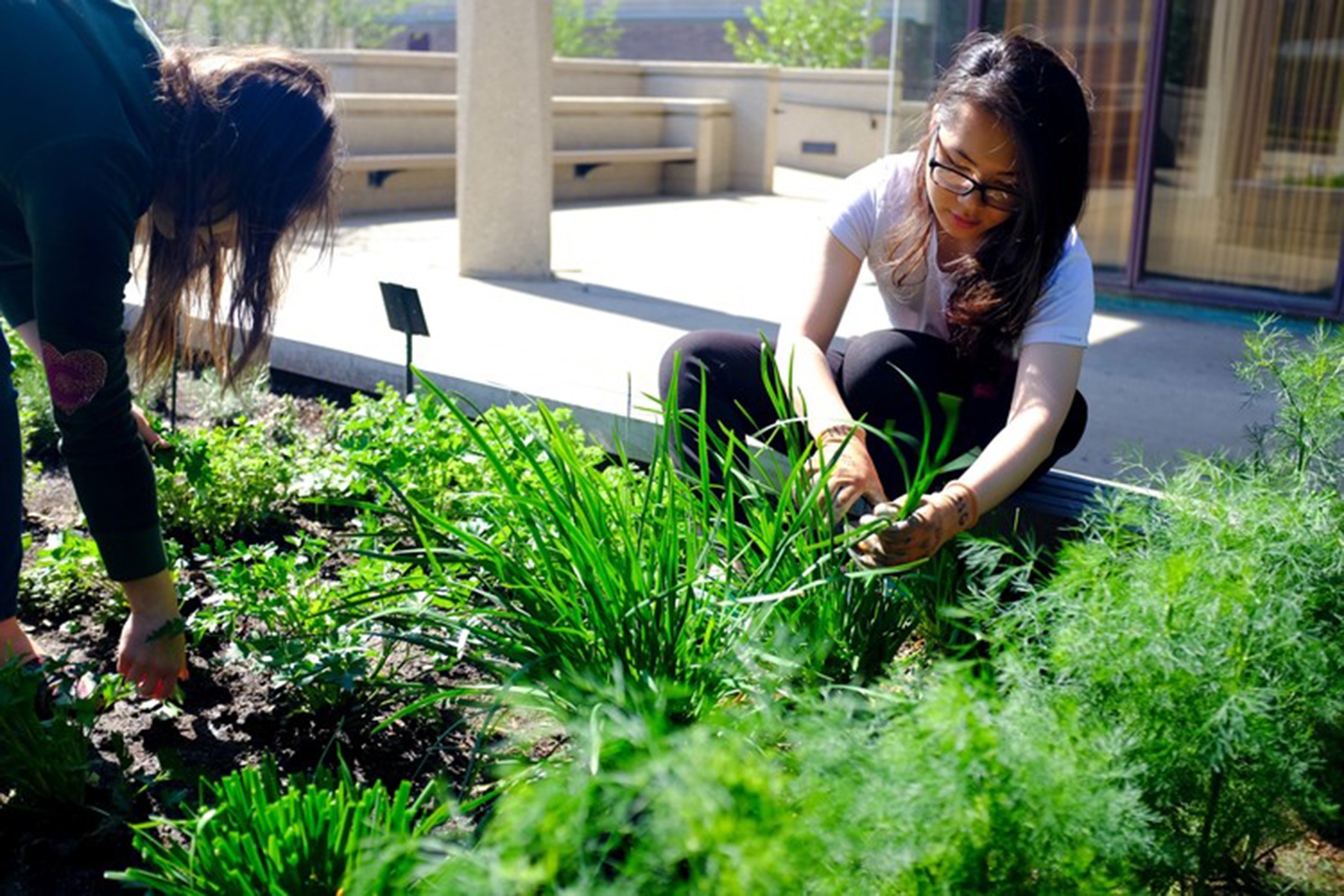 Students plant in the UIC Heritage Garden