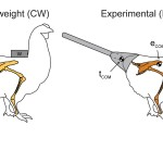 Diagram of chicken research