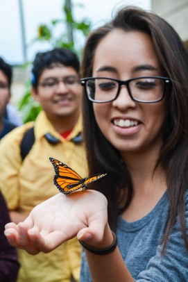 Monarch butterfly released from UIC Heritage Garden