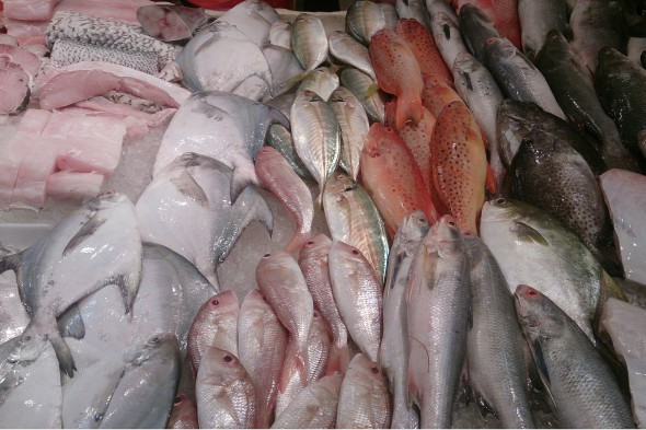 Raw fish for sale