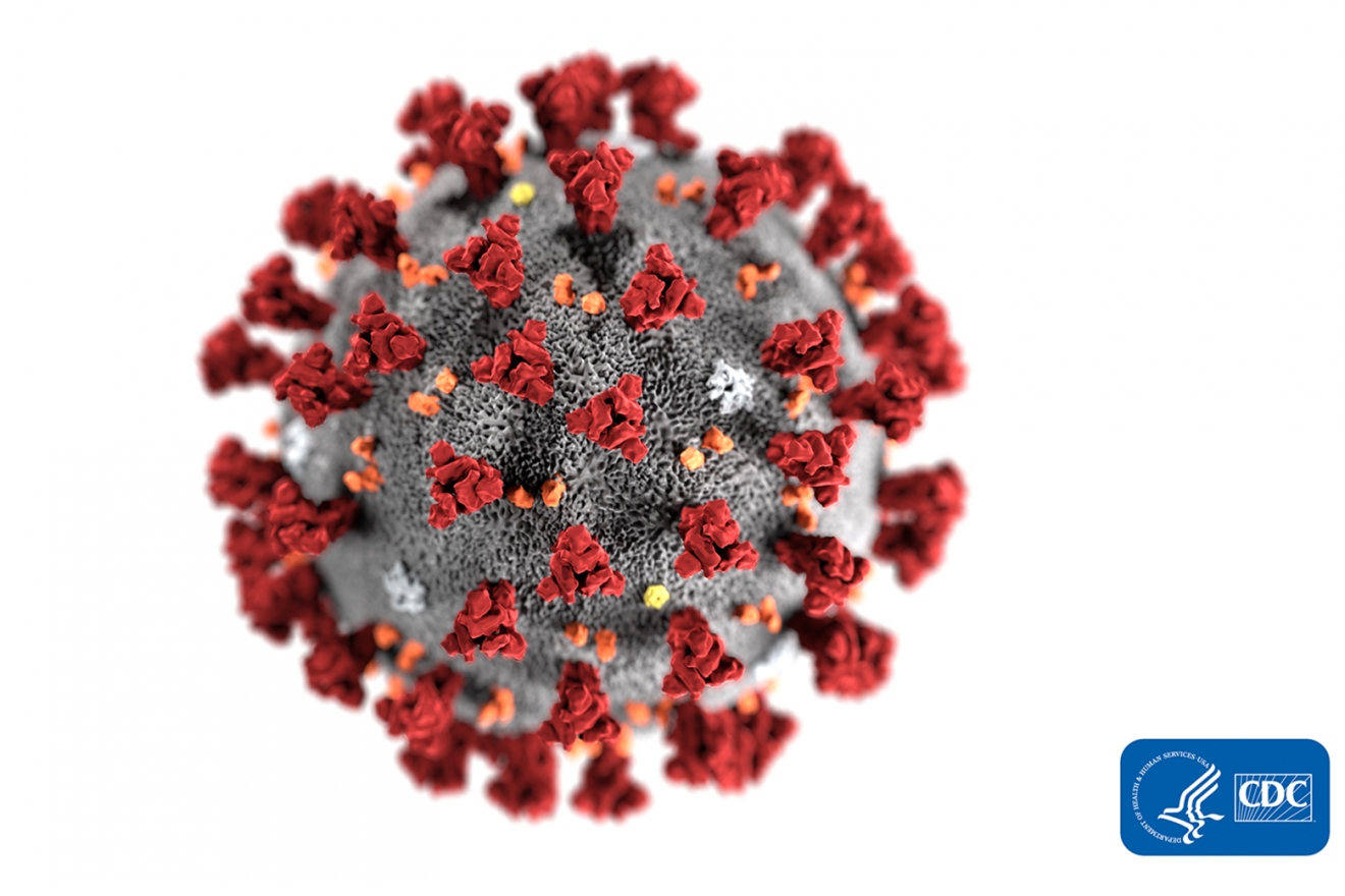 Ultrastructural morphology exhibited by the 2019 Novel Coronavirus