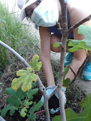 A student works in the UIC Heritage Garden.